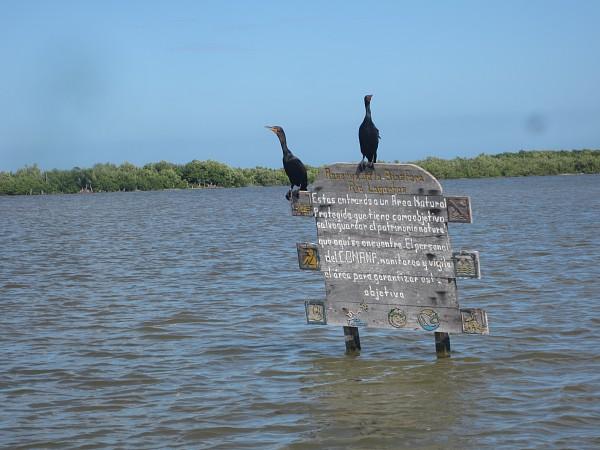 Welcome to the biosphere Rio Lagartos